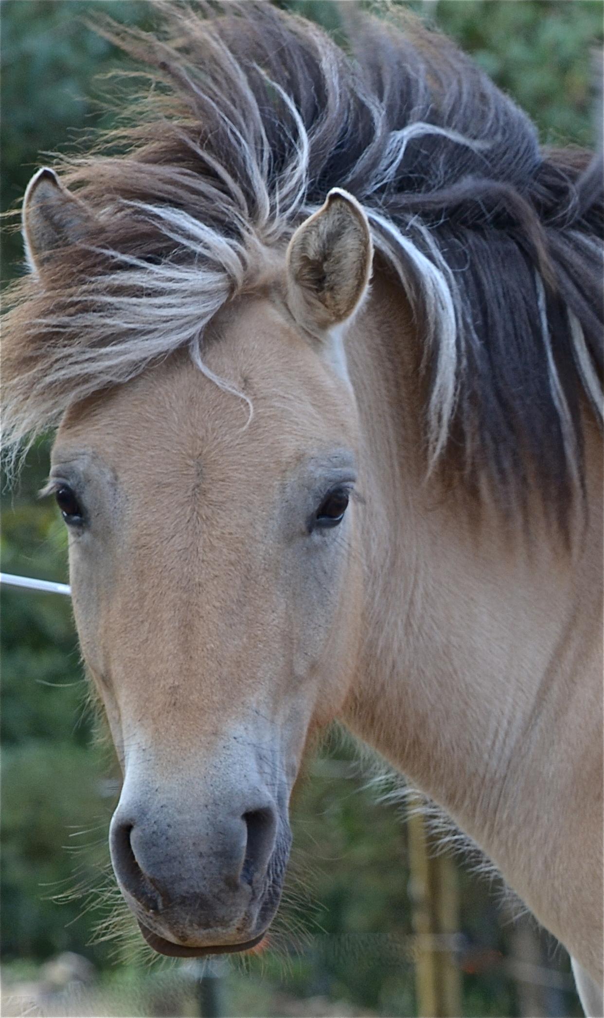 therapie par le cheval